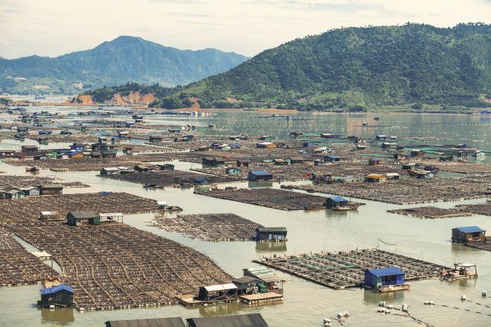 Фотография рыбной фермы в провинции Фуцзянь, Китай.